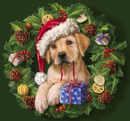 Hund firar jul