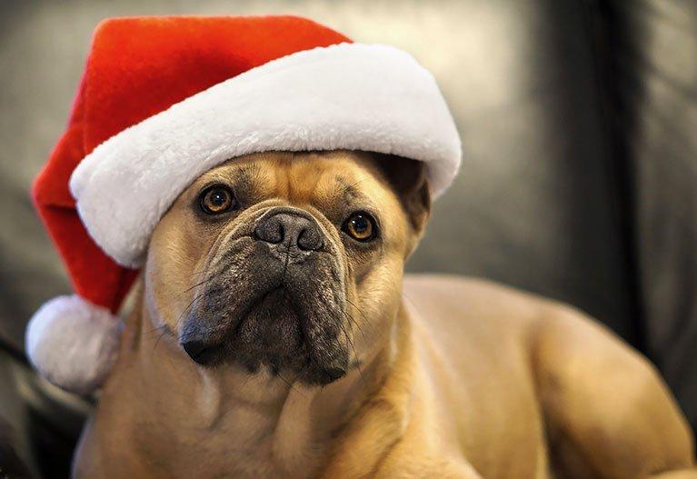Rolig julkort med hund