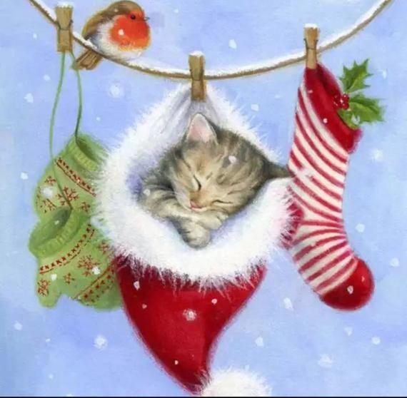 Katt som myser i julmössa