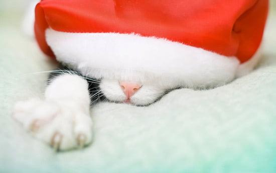 Katt med tomteluva