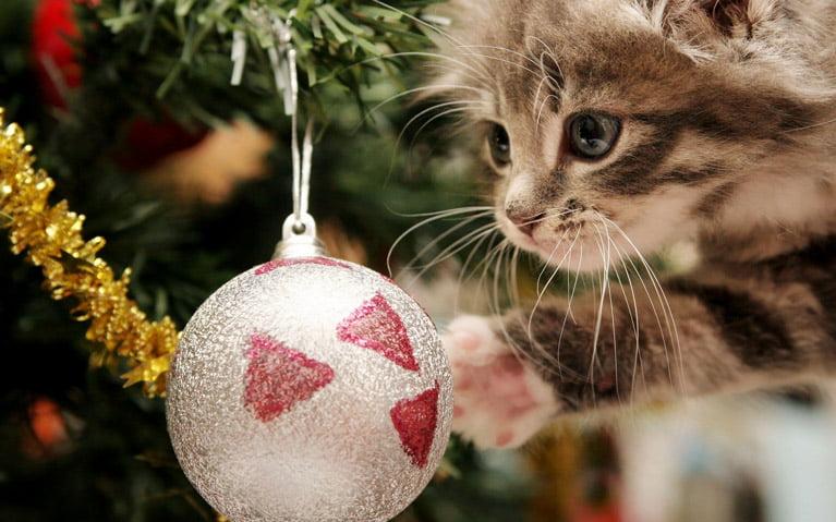 Katt leker med julgran