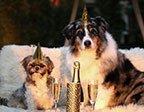 Nyårskort med hundar