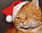 Katt med tomteluva - Rolig julkort