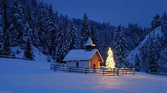 Vacker julgran